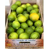 Limoni Siciliani Di Ribera