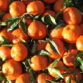 clementine, mandaranci, clementine siciliane, clementine di ribera, mandaranci siciliani