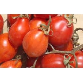"Tomatitos del Vesuvio D.o.p."" frescos"