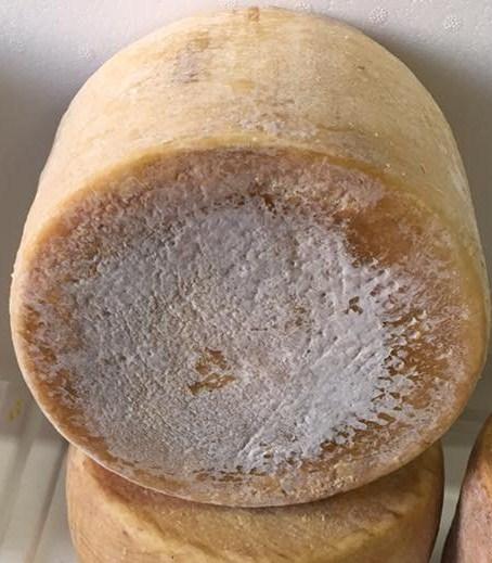 Pecorino Sardo con cuajo vegetal- Dolce di cardo curado 9 meses -  Azienda Agricola Mureddu Aru
