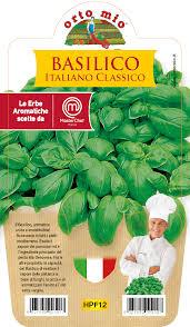 Albahaca italiana (Genovese) Plantita  en Vaso 10  - Orto mio