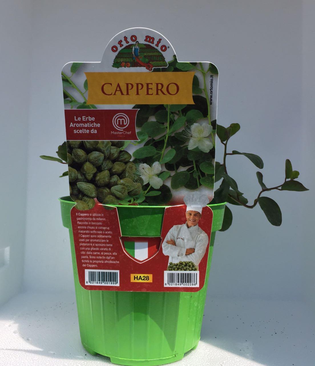 ALCAPARRAS- Plantina en vaso de 14 cm - Orto mio