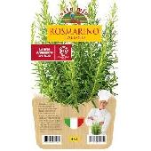 ROMERO - Plantita en maceta de 14 cm . Orto mio
